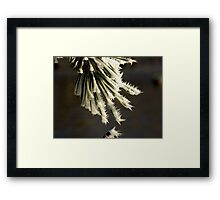 Result of Hoar Frost Framed Print