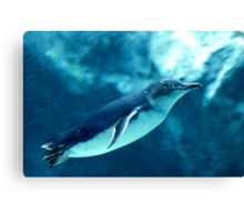 Little Penguin Canvas Print