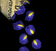 Petal Chips by Christian Slanec   FineArt Studio