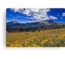 Rocky Mountain WIldflowers Canvas Print