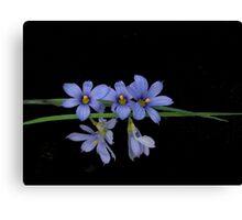 Tiny Blue Eyed Grass Canvas Print