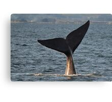 Southern Right Whale 10 Canvas Print