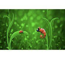 Ladybug and Chameleon Photographic Print