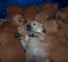 Comfortable in the pile by Molly  Kinsey