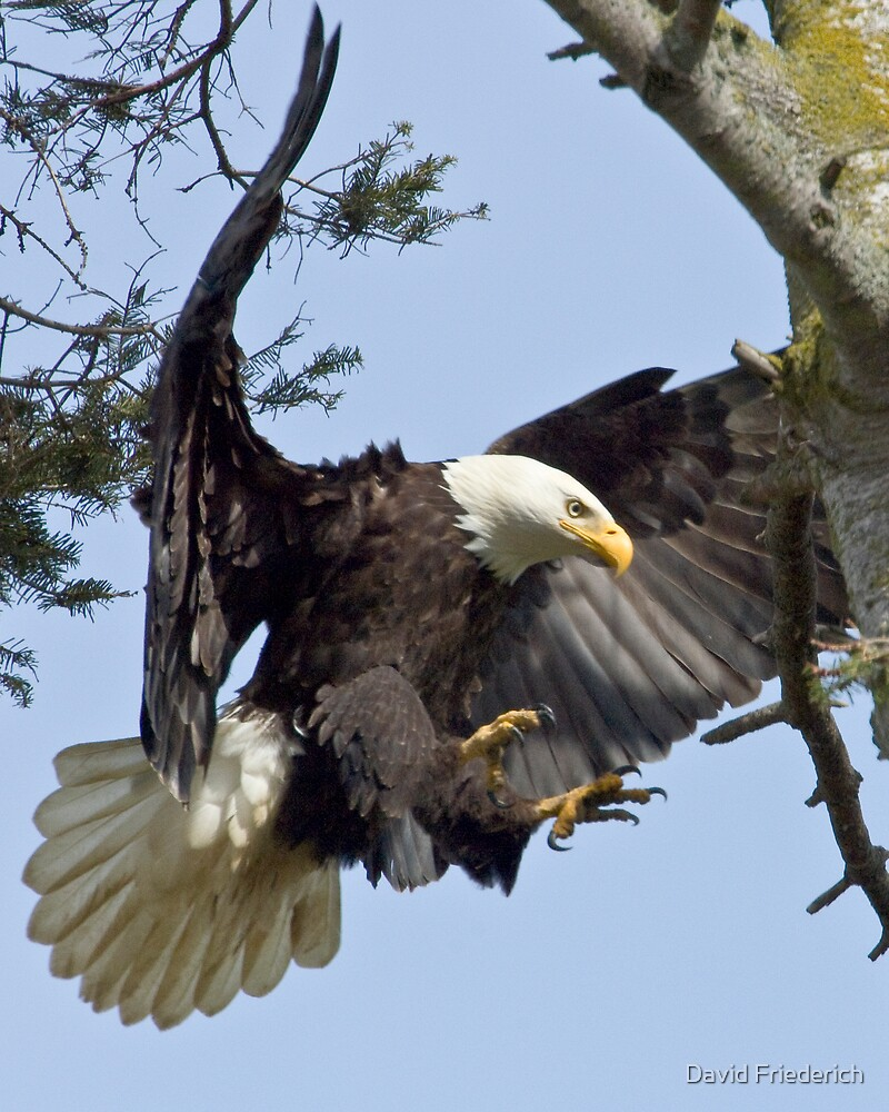 Returning to the Nest by David Friederich
