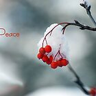 Peace by Robin Webster