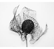 Protection ~ Seedhead  - JUSTART © Photographic Print