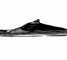 Whales II by KellasRuth
