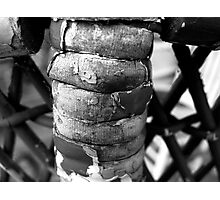 Wicker Spine Photographic Print