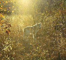 Autumnwolf by Asoka