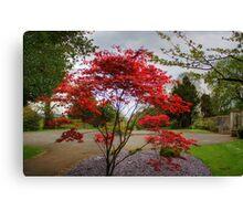 Red bush Canvas Print