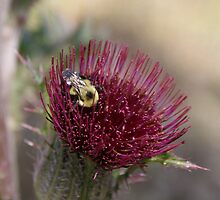 Busy Bee by donnau