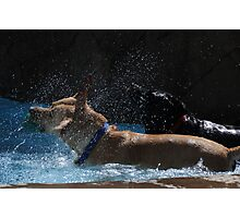 In The Pool Photographic Print