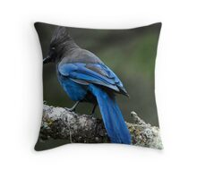 Steller's Jay, British Columbia's Bird Throw Pillow