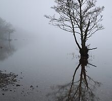 Loch Lomond tree in mist by Maria Gaellman