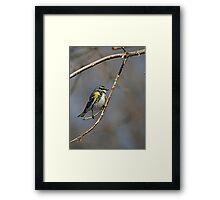 Yellow-rumped Warbler 2 Framed Print