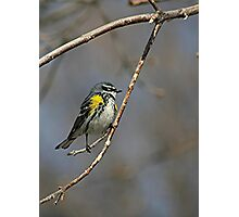 Yellow-rumped Warbler 2 Photographic Print