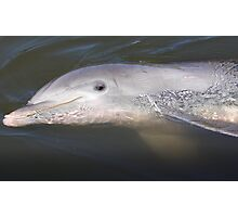 That Dolphin Look Photographic Print