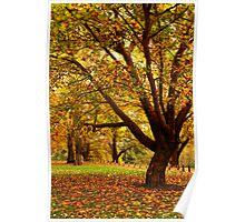 Bega during autumn Poster