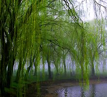 Weeping by the Lake by AJRosera