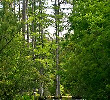 Cypress Lagoon by photosan