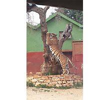 Beautiful Tiger Photographic Print