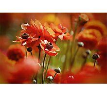 Orange feast  Photographic Print
