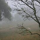 Foggy morn on the Otway by oiseau
