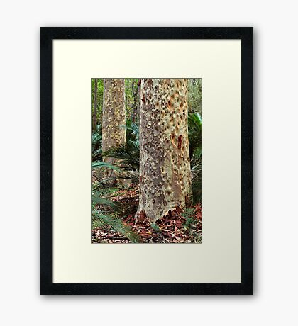 Spotted Gum - Mimosa Rocks National Park Framed Print