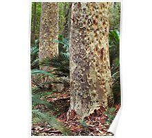 Spotted Gum - Mimosa Rocks National Park Poster