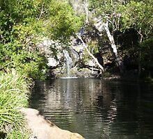 Sunshine Coast Hinterlands, Kondalilla Spring - Queensland by Xeravyn