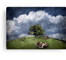 15 cows on the meadow Canvas Print