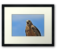 Yellow Billed Kite - Calling all Friends Framed Print