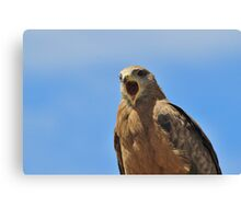 Yellow Billed Kite - Calling all Friends Canvas Print