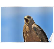 Yellow Billed Kite - Calling all Friends Poster