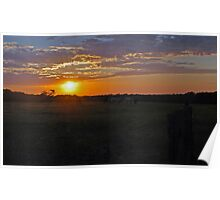 Colo Vale Cattle Sunrise Poster