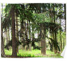 Wonderful woodlands Poster