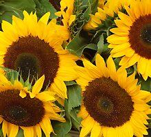 Sunflowers by Glosoli