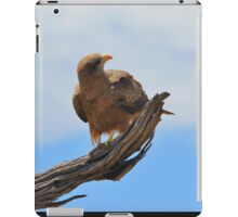 Yellow Billed Kite - Looking at Heaven iPad Case/Skin