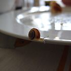 the snail by Glosoli