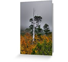 Pencil Pine and Fagus Greeting Card