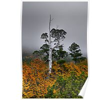 Pencil Pine and Fagus Poster