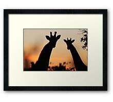 Giraffe Sunset - African Wildlife - Peaceful Tranquility Framed Print