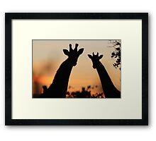 Giraffe Sunset - African Wildlife - Peaceful Tranquility Framed Print