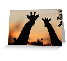 Giraffe Sunset - African Wildlife - Peaceful Tranquility Greeting Card