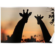 Giraffe Sunset - African Wildlife - Peaceful Tranquility Poster