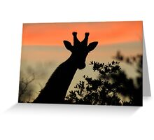 Giraffe Sunset - African Wildlife - Majestic Peace Greeting Card