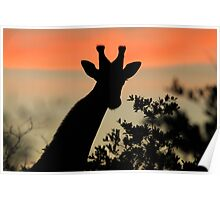 Giraffe Sunset - African Wildlife - Majestic Peace Poster