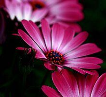 Fading Flower Beauty by Deborah  Benoit