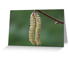Catkin Greeting Card